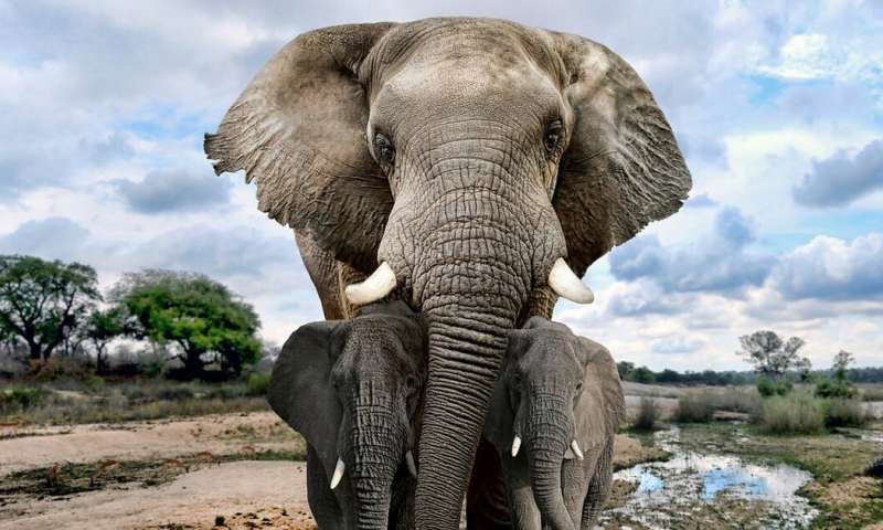To save the African elephant, focus must turn to poverty and corruption