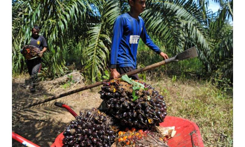 Total argued that it was unfair to single out palm oil