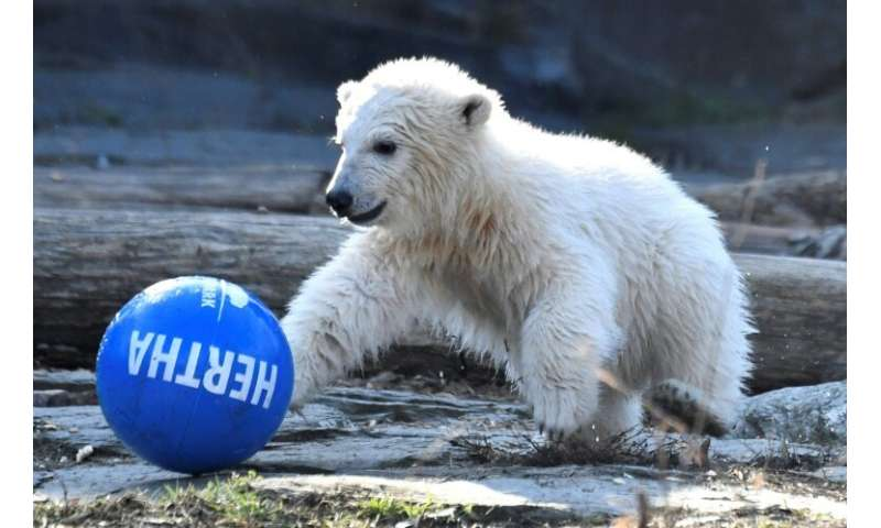 To the great relief of her keepers, Hertha has made it through the crucial first three months when a captive cub's chances of su