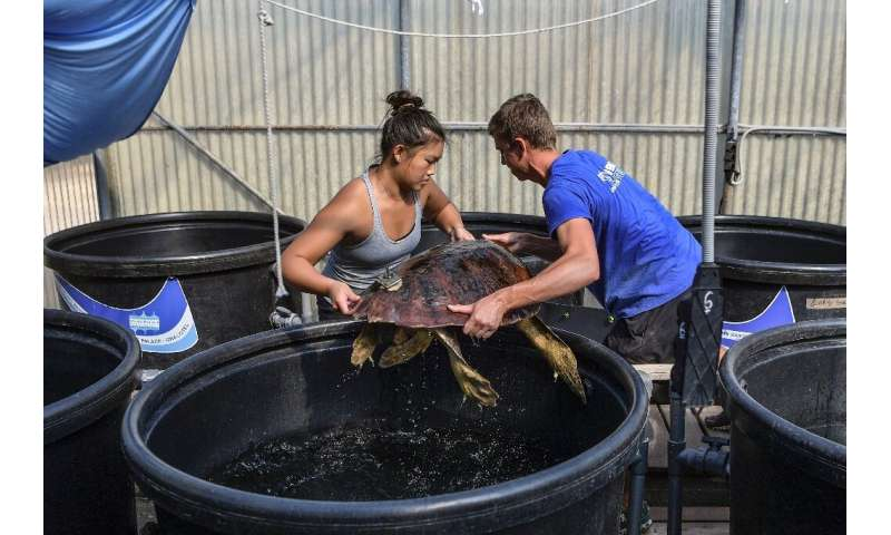 Tourism, climate change and good fortune all weigh on the future of the loggerhead population