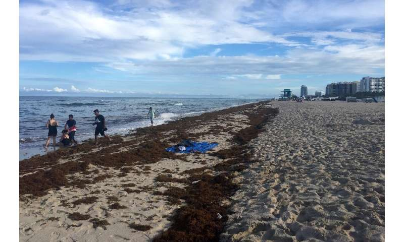 Beaches choked with stinky seaweed could be the new normal