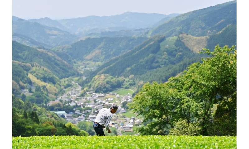 Traditional Japanese tea also suffers from something of an image problem, some experts say, as it is considered the preserve of