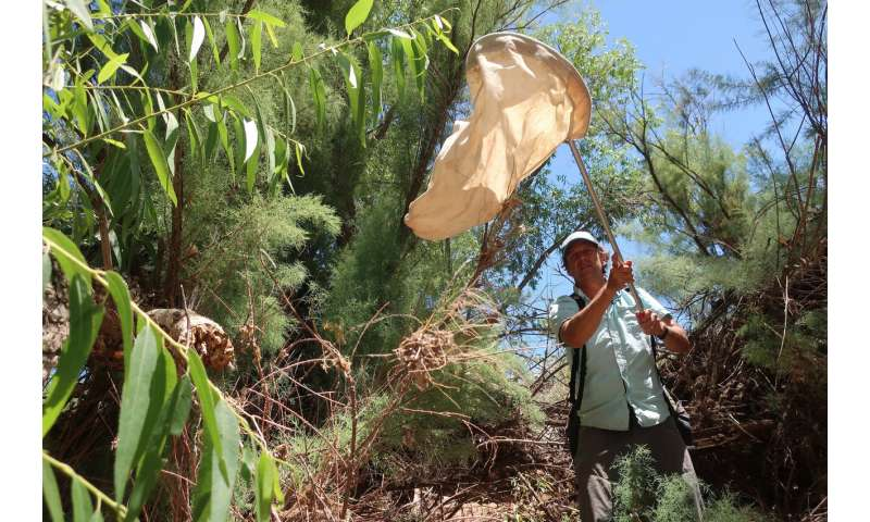 Tree-eating beetle gains ground in US West, raising concerns