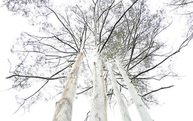 Trees remember heatwaves