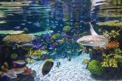 Tropical fish breeding to improve as result of new collaboration