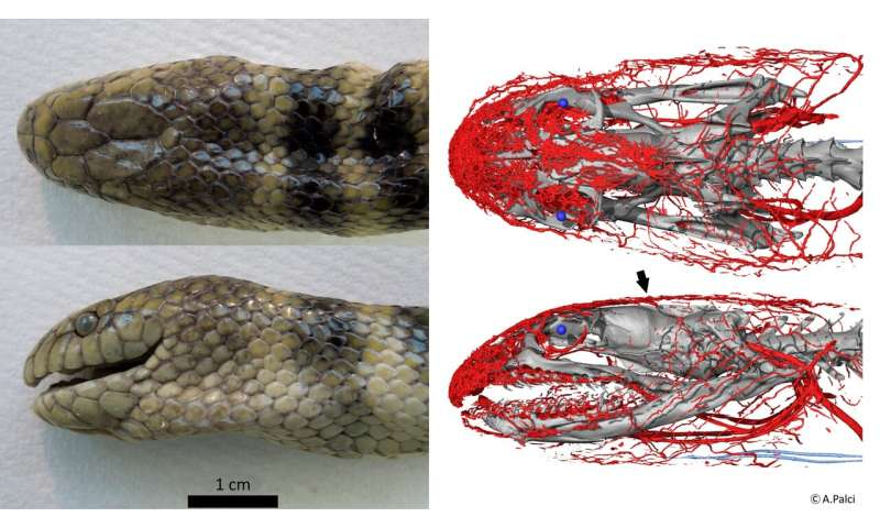 Tropical sea snake uses its head to 'breathe'