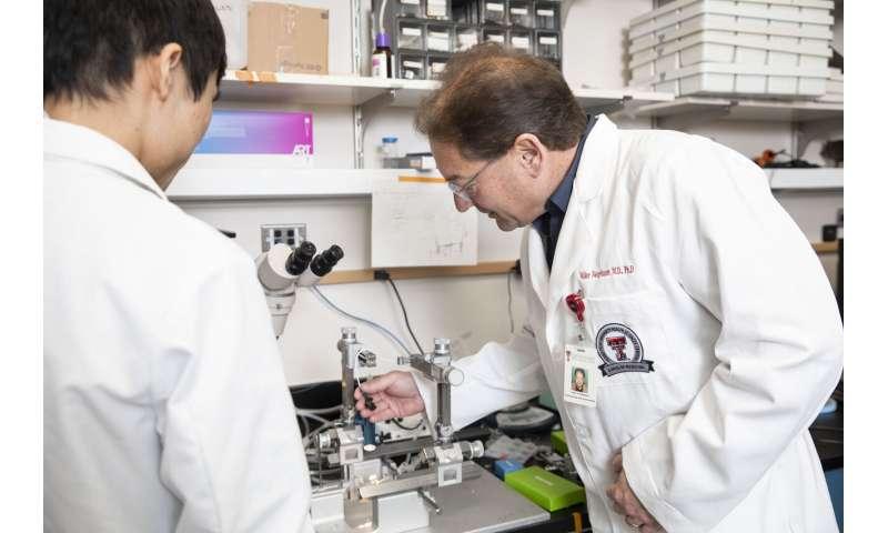 TTUHSC study shows brain mechanisms have potential to block arthritis pain