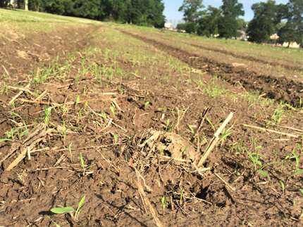 Turning up the heat for weed control