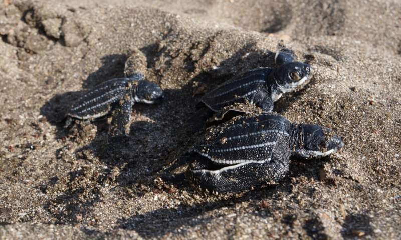 Turtle-friendly plastic? A crafty solution to pollution, poaching and poverty