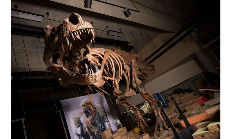 UAlberta paleontologists report world's biggest Tyrannosaurus rex
