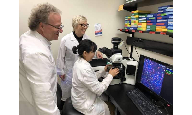 UCalgary researchers find a way to stop lung damage due to the body's immune response