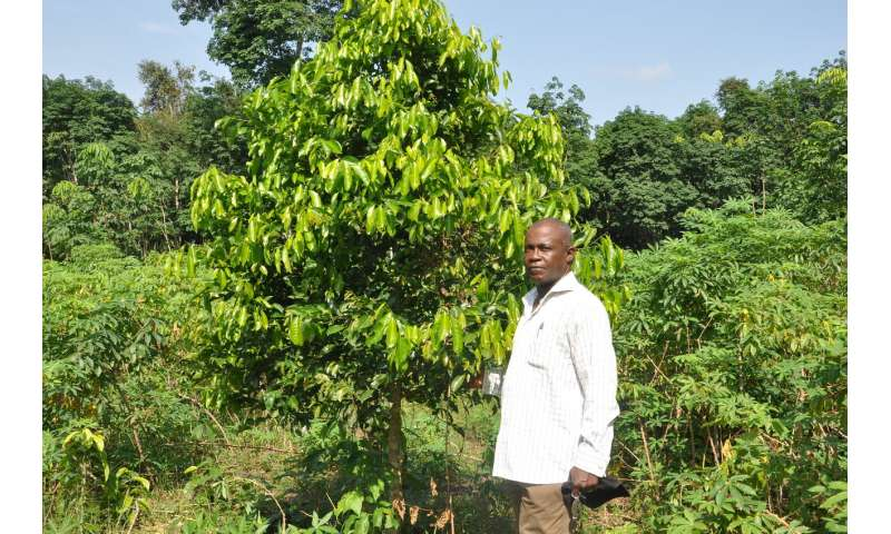 Undercounting of agroforestry skews climate change mitigation planning and reporting