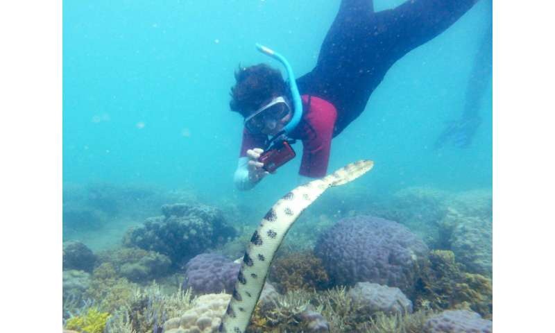 Underwater grandmothers reveal big population of lethal sea snakes
