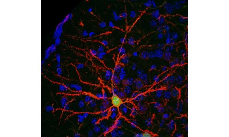 Using an anti-smoking drug to control neurons