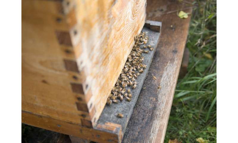 Using probiotics to protect honey bees against fatal disease
