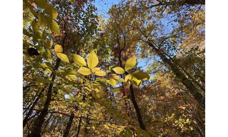 UT AgResearch and The Nature Conservancy to partner on working woodlands
