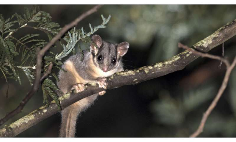 Victoria's threatened species lose out to logging