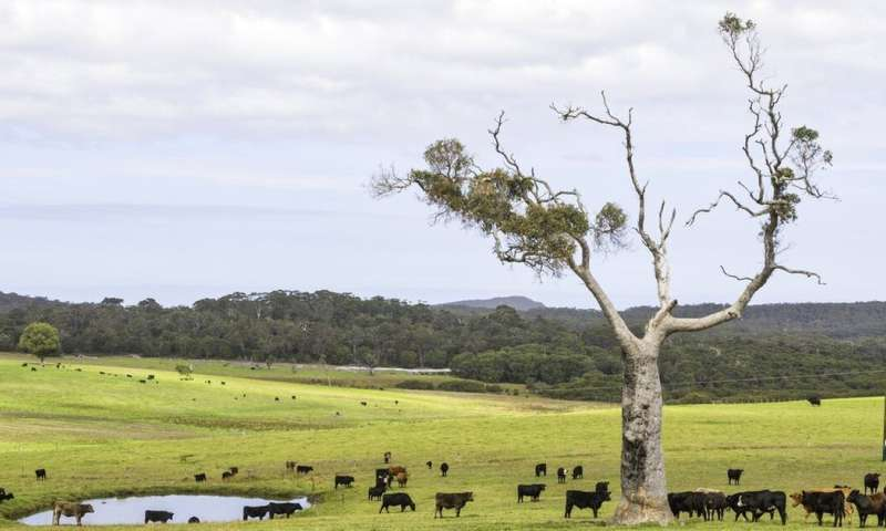 Virtual fences and cattle: how new tech could allow effective, sustainable land sharing