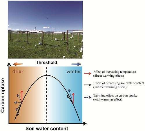 Water availability determines carbon uptake under climate warming: study