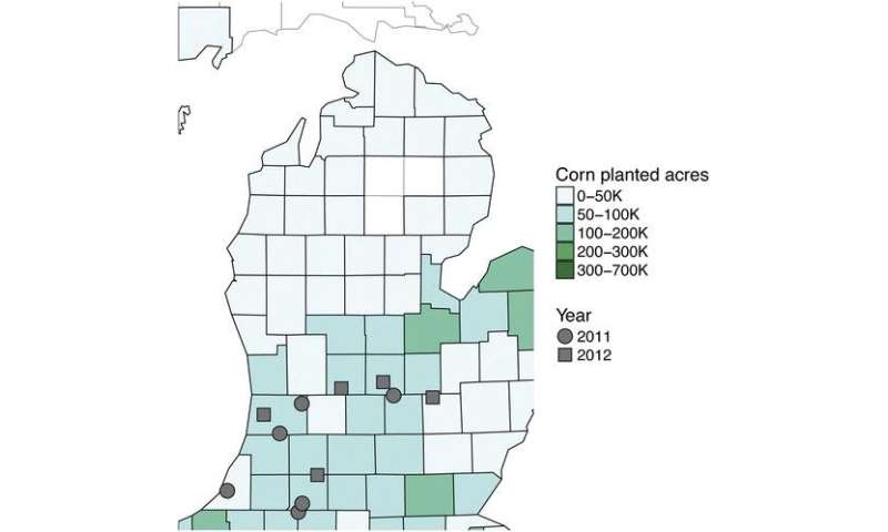 Water mold research leads to greater understanding of corn diseases