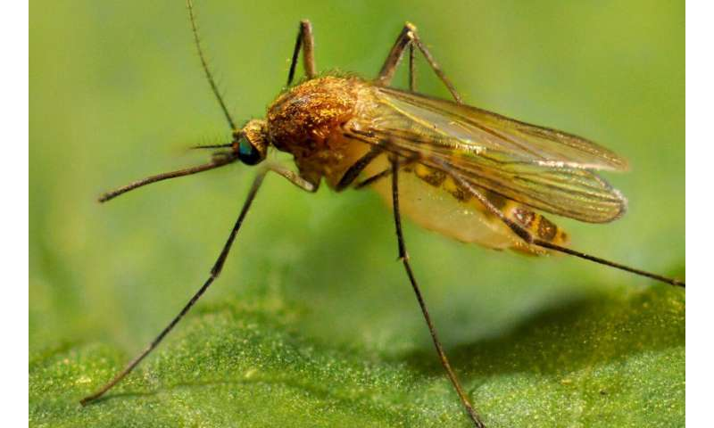 West Nile virus in the New World: Reflections on 20 years in pursuit of an elusive foe