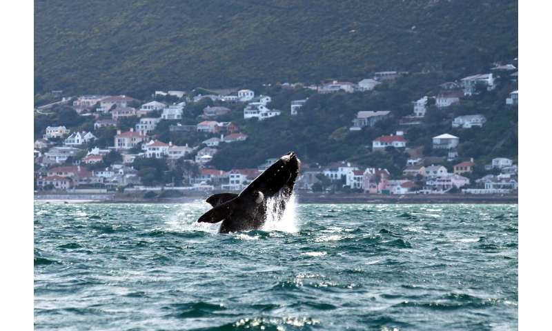 Whales have been caught in octopus trap lines in Cape Town's False Bay seen here