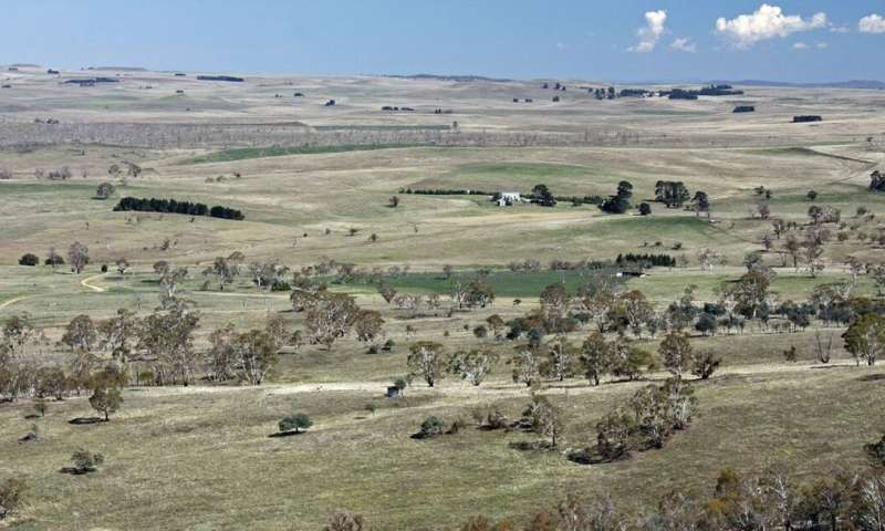 What are native grasslands, and why do they matter?