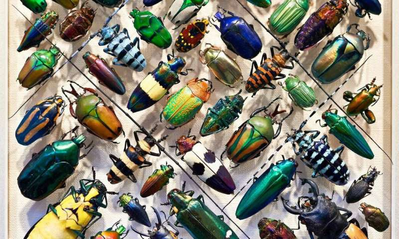 What happens to the natural world if all the insects disappear?