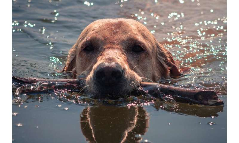 What is leptospirosis and how can it harm us and our pets?