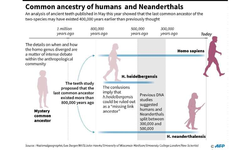 When humans and Neanderthals diverged