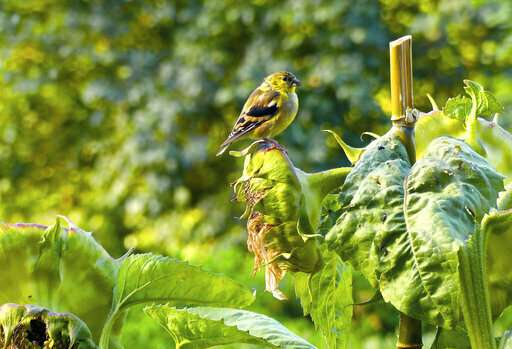 When managing birdfeeders, think bird health and safety