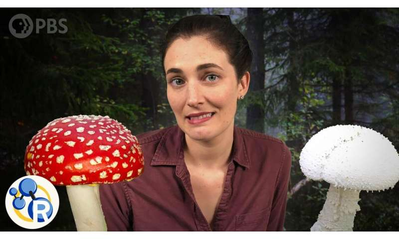 Which of these mushrooms could kill you? (video)