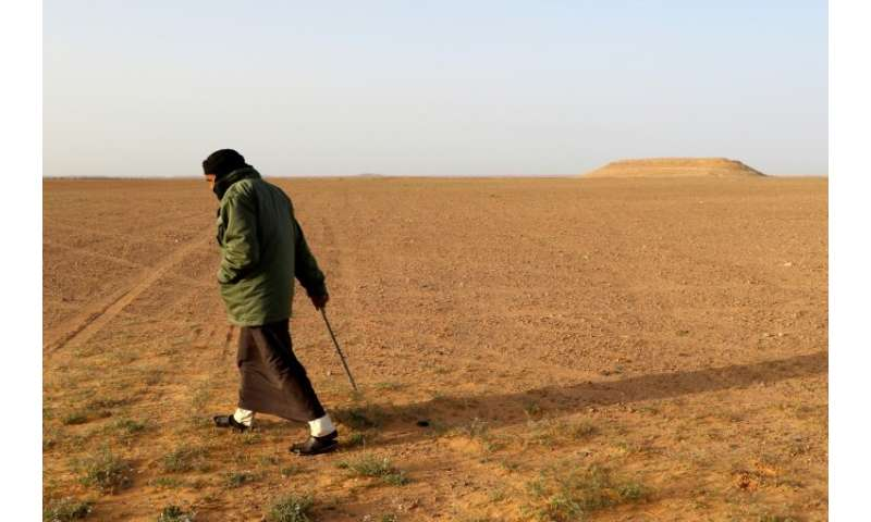 """White truffle hunters comb the desert in Libya for the fungus known locally as """"Terfas"""" which grows under the sand nur"""