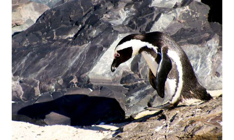 **Why biodiversity among marine mammals and birds generally rises in cold, temperate waters
