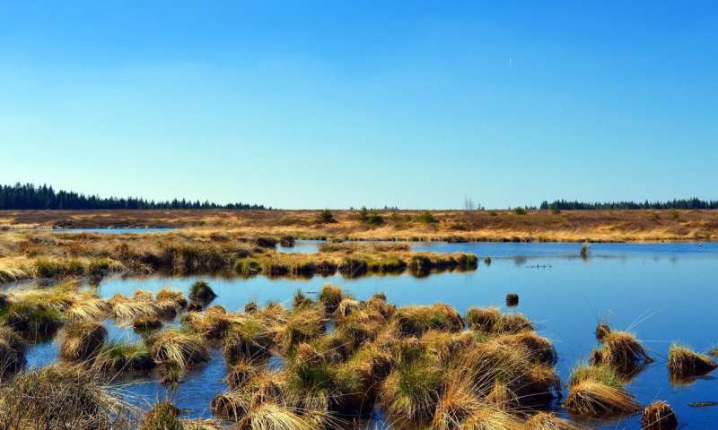 Why bogs may be key to fighting climate change