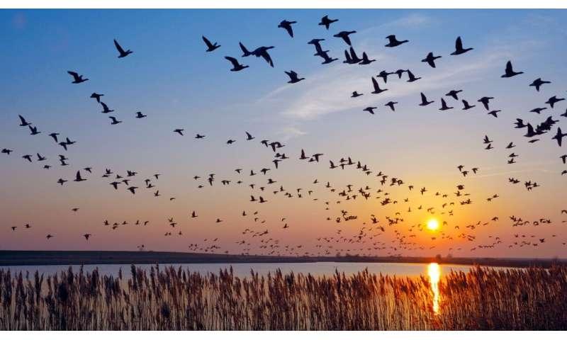 چرا پرندگان شبانه مهاجرت می کنند؟