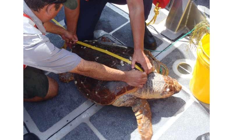 Why endangered species matter
