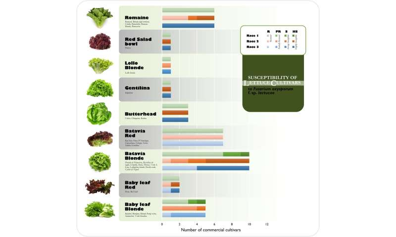Why have so many new diseases developed in the bagged salads sector?
