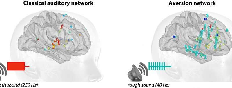 Why is the brain disturbed by harsh sounds?