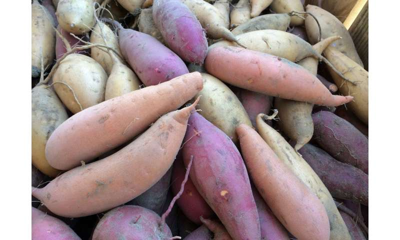 Why purple sweet potatoes belong on your holiday table