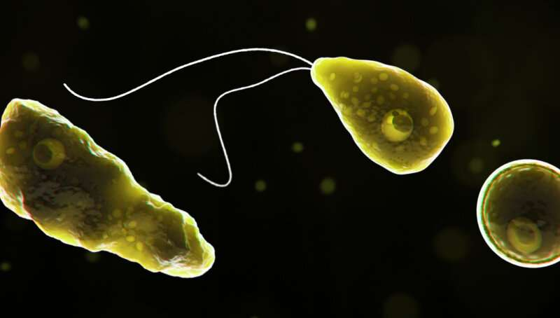 Why the 'brain-eating' amoeba found in freshwater lakes – while rare – is so deadly