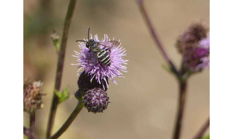 Wild bees flock to forested areas affected by severe fire