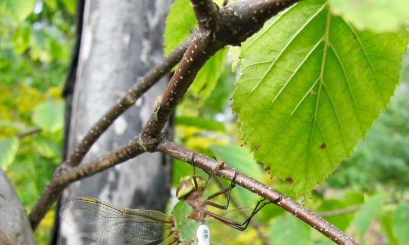 Wind, warmth boost insect migration, first-ever University of Guelph study reveals