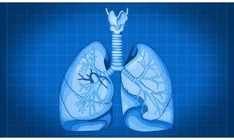 **With cellular blueprint for lungs, researchers look ahead to organ regeneration