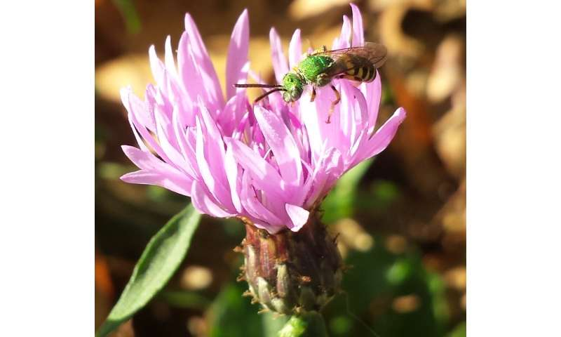 With flower preferences, bees have a big gap between the sexes