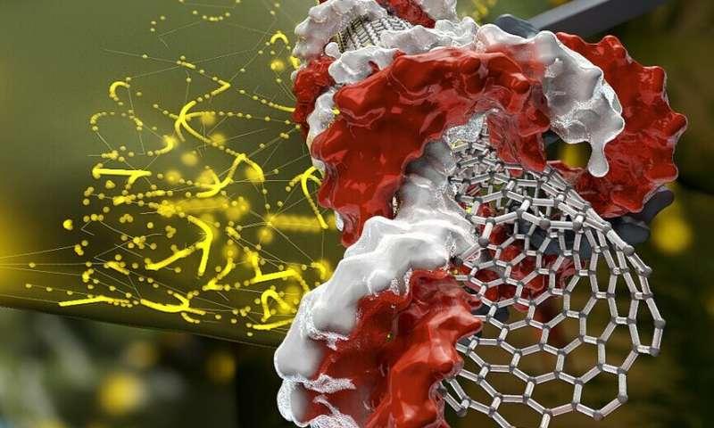 With nanotubes, genetic engineering in plants is easy-peasy