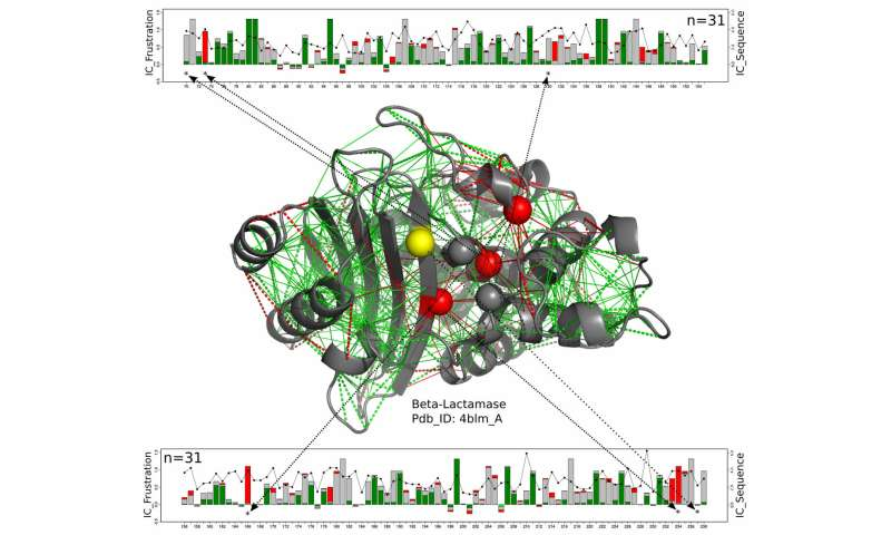 Working proteins make good use of frustration