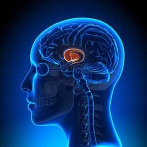 Yale study uses real-time fMRI to treat Tourette Syndrome