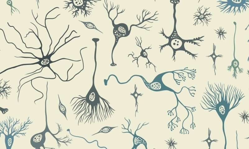 Your big brain makes you human – count your neurons when you count your blessings