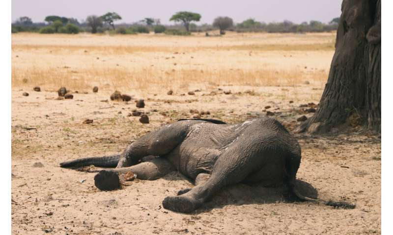 Zimbabwe says 200 elephants have now died amid drought